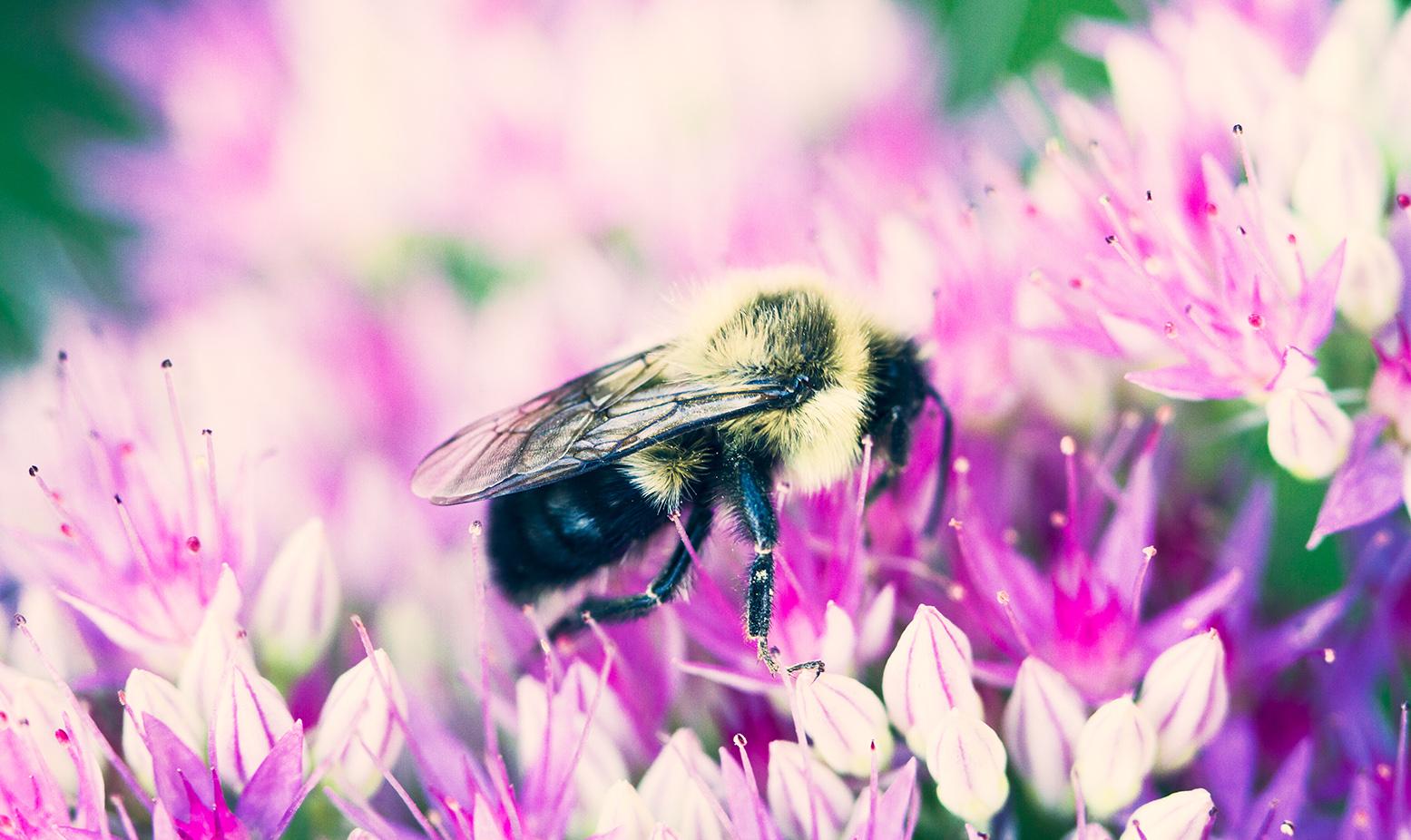 backyard_bee