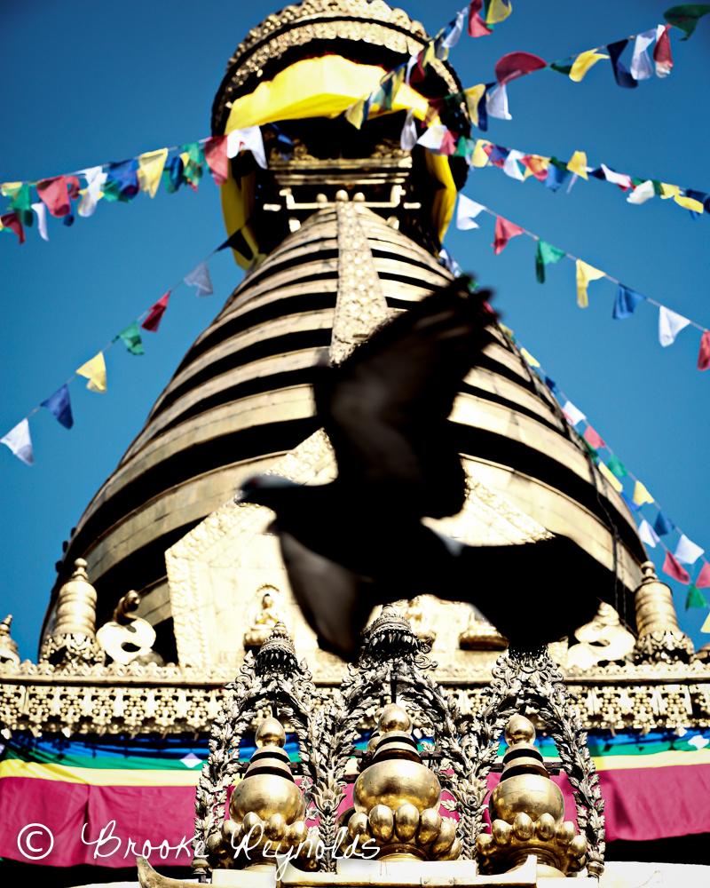 nepal--9