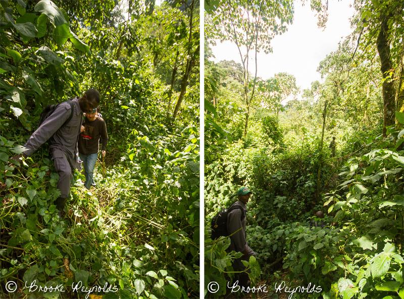 Uganda Gorilla Trek | Compassionate Nomads