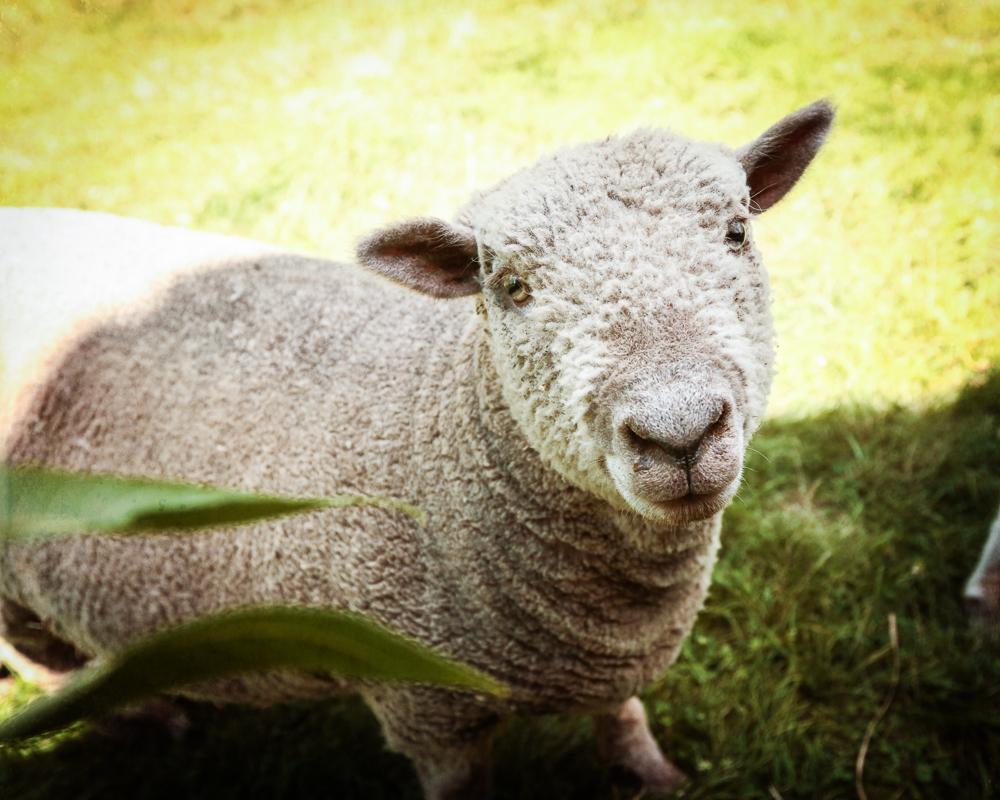 soulspace, farm, sanctuary, wisconsin, animal, rescue, vegan
