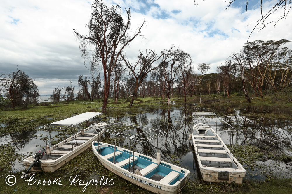 Boats for exploring Lake Naivasha